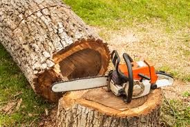 picture of a tree being removed with chainsaw sitting on stump